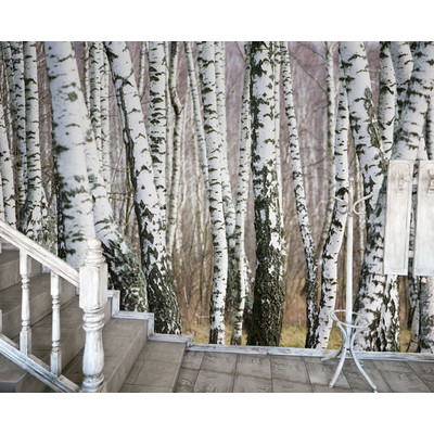 Jp london md9105umbps peel and stick birch trees forest for Black and white forest wall mural