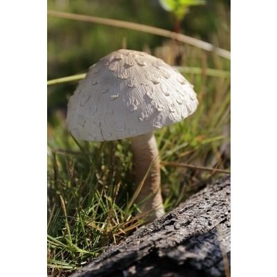 Fairy Garden - Mushroom - Grey - Large